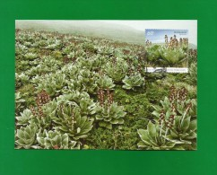 AAT 2010  Mi.Nr. 184 , Pleurophyllum Hooker - Macquarie Island - Maximum Card - First Day 26 OCT 2010 - Maximum Cards