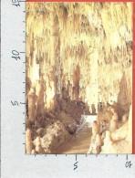 CARTOLINA VG ITALIA - Grotte Di CASTELLANA (BARI) - Silenzioso Splendore - 10 X 15 - ANN. 198? - Bari