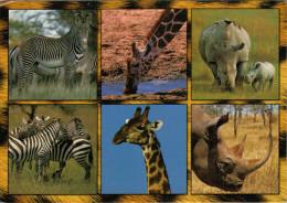 KENYA  COUSINS  OF  THE  WILD   MAXICARD  12X17  (VIAGGIATA) - Kenia