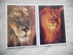 LOT DE 2 CARTES LIONS..COLL.VIE SAUVAGE - Lions