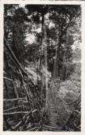 Congo - Cartolina Antica MOYEN-CONGO, UN PONT DE LIANES (non Viaggiata) - L96 - Congo - Brazzaville