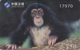 Télécarte Chine - ANIMAL - SINGE - MONKEY APE Phonecard - AFFE Telefonkarte - 208 - Ohne Zuordnung