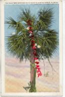 FLORIDE- THE PALM TREE ENTWINED WITH NIGHT BLOOMING CEREUS - FLORIDA   ETATS UNIS AMERIQUE - PALMIER - Etats-Unis