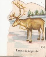 Vache Serieuse Renne De Laponie - Vieux Papiers