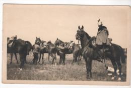 Nr. 1228,  FOTO-AK,  K.u.K. , Pferde, Reiter - Guerra 1914-18