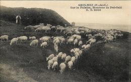Cap Gris Nez - Audinghen - Sur La Falaise, Moutons De Pré Salé - France