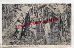 ETATS UNIS - CUTTING BANANAS  BANANA FARM - BANANIER  BANANE - Costa Rica
