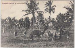 26393g  DAR ES SALAM - Kamel - Menagerie - Deutsch-Ost-Afrika - Tanzanie