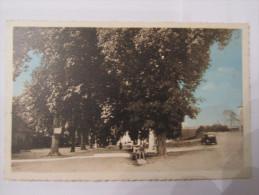 POMPADOUR. Allée Des Marronniers. Carte Colorisée. - Arnac Pompadour
