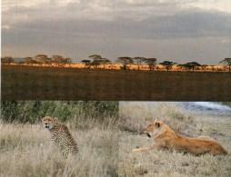 Postcard - Serengeti National Park - UNESCO, New Zealand. WhsT09 - Tanzania
