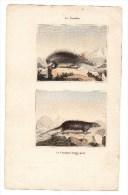 Authentique Gravure 19ème Mammifères Rongeurs Le Coendou Le Coendou à Longue Queue - Prints & Engravings
