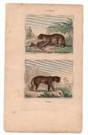 Authentique Gravure 19ème Mammifères Carnivores Le Léopard L´once - Stiche & Gravuren