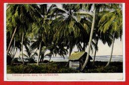 Amérique - COSTA RICA -- - Coconut Groves Along The Caribean - Sea - Costa Rica