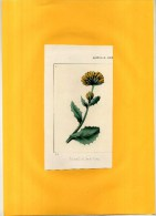 - CALENDULA TOMENTOSA . LITHO  DU XIXe S.  . DECOUPEE ET COLLEE SUR PAPIER . - B. Flower Plants & Flowers