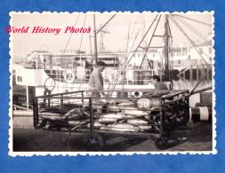 Photo ancienne snapshot - Port � identifier - P�cheur triant le poisson � quai - Fish Fisher Boat Chalutier Ship M�tier