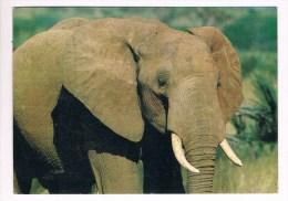 33618 ( 2 Scans ) Elephant - Olifant - Éléphants