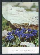 Schwalbenwurzenzian Im Kaukasus- Gel. - J21/77-290122  2605 G - Oberlausitzer Kunstverlag - Blumen