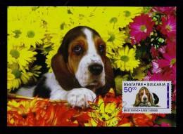 BASSET HOUND  Dogs Chiens Canis Perros Faune Animals 1997 Carte Maximum Card Bulgaria Mc542 - Dogs
