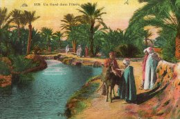 B20083 Un Oued Dans L'Oasis - Other Cities