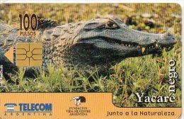 Crocodile Yacaré Caiman Télécarte Argentine Honecard  J154 - Argentina
