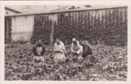 La Valsainte, Chartreuse - L'Angelus Au Jardin - FR Fribourg