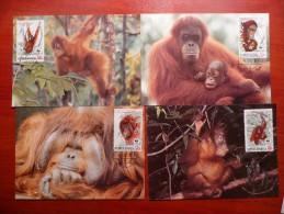 WWF Indonesia Indonesie Indonesien  Orangutan 1989 CM MK MC Maxi Maximum Cards Maxicard Maximumkarte - Maximumkarten