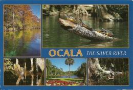 Tortue Schildpad Turtle / Alligator / Ocala Florida USA - Animaux & Faune