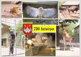 Anvers (Belgique) - Jardin Zoologique - Quelques Vues (JS) - Animaux & Faune