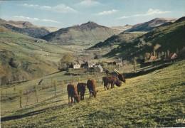 En Auvergne Paturages - Francia