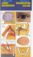 LE CORPS HUMAIN - Documentation Scolaire - Deltas Chantecler - 1986 - Neuf Sous Célophane - Fiches Illustrées