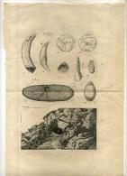 - PARTIE D'UN PROSPECTUS D'UN OUVRAGE PREHISTORIQUE DU XIXe S . 1880 . - Archéologie