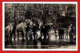 ASIE - SRI LANKA - CEYLON --  Temple Eléphants At Katugastota River Near Kandy - Sri Lanka (Ceylon)