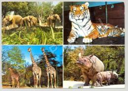 Bâle (Suisse) - Zoologischer Garten - Quelques Vues - Photos Jörg Hess Et Paul Steinemann (JS) - Autres