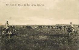 COLOMBIE -ganado En Los Lianos De San Martin (colombia). - Colombie