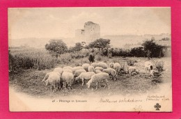 Pâturage En Limousin, Animée, Précurseur, 1902, (CCC&C) - Centre-Val De Loire