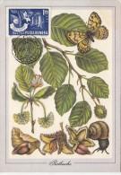 TREES, EUROPEAN BEECH, BUTTERFLY, SNAIL, CM, MAXICARD, CARTES MAXIMUM, 1986, ROMANIA - Bäume