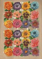 *24 X BLOEMEN-/FLEURS    = VOLLEDIG  VELLETJE-/FEUILLE  COMPLETE. - Flowers