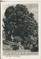 Bad Münder V.1959 Alte Kastanie (35031) - Hameln (Pyrmont)