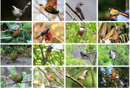 28 Postcards Of Thrush Bird Flying Birds Eager Goose Swan Etc , Postkarte Carte Postale - Vogels