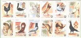 MATCH LABELS  - BIRDS - PIGEONS  - Cc 1960. -Dolac  - Unused - Cajas De Cerillas - Etiquetas