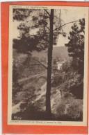 Gard  : La Grand-Combe, Trescol, A Travers Les Pins - La Grand-Combe