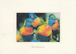 Australien Wildlife - Sydney