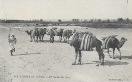 Scènes Et Types - Paysage Du Sud - Dromadaires - Collection Idéale P.S. - Carte N°448