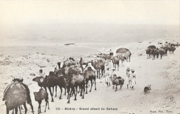 Biskra - Grand Désert Du Sahara - Caravane - Edition Maure - Carte Non Circulée