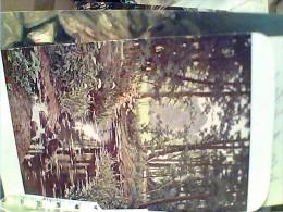 ILLUSTRATA H BIVA RUSCELLO NEL  BOSCO   V1922  FH9532 - Paintings