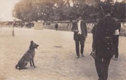 Carte Photo 1905 Président De La République ? Fête Canine (carte Arrivée A Barbatre ,noirmoutier ,vendée) - People