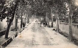 Algérie ALGER  BLIDA  Avenue Du Moulin - Blida