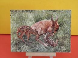 Animaux Faune- Chevreaux  !! - Non Circulé - Un Clic Sur La Photo .. - - Tierwelt & Fauna