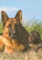 DOGS / HUNDE / CHIENS /  -    Postcard   Unused   ( P 1038 ) - Perros