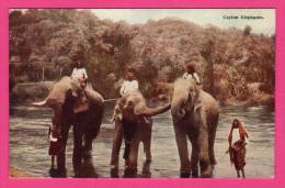 Ceylon - Éléphants - Animée - PLÂTÉ Ltd N° 23 - Sri Lanka (Ceylon)